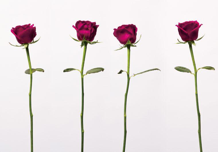 THE GENTSのオーダータキシードのルックブックの花の写真